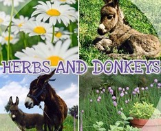 Herbs and Donkeys Charity Festival