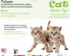 cat adoption