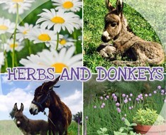 herbs and Donkeys