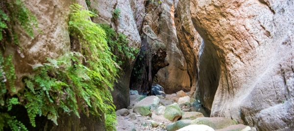 Avakas Gorge (Linear) - Pafos (Paphos) District, Akamas Forest