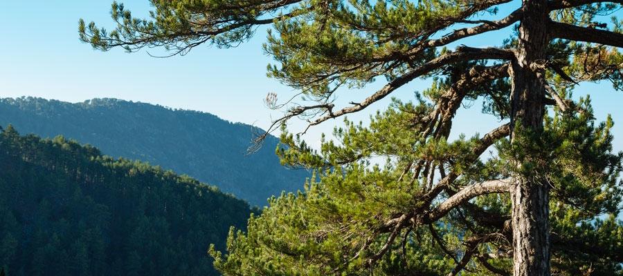 Loumata ton Aeton (Linear) - Lemesos (Limassol) District, Troodos Forest Nature Trail